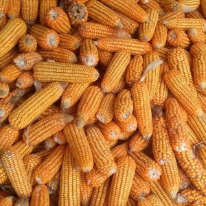 Farine de maïs jaune 8 rangs Formenton